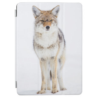 USA, Wyoming, Yellowstone National Park, Coyote 3 iPad Air Cover