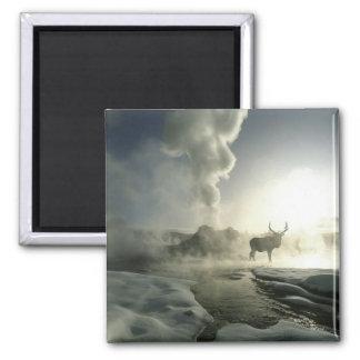 USA, Wyoming, Yellowstone National Park. Sunrise Magnet