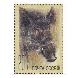 USSR ~ Stamp Russian Wild Boar Postcard