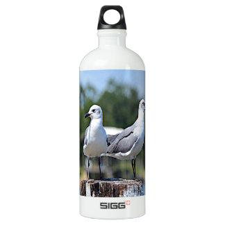 Utah California Gull