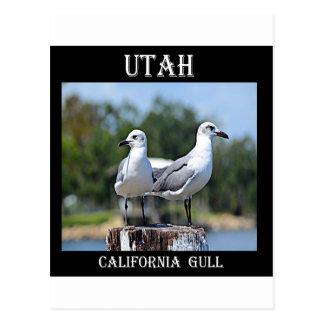 Utah California Gull Postcard