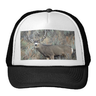 Utah mule deer buck trucker hat