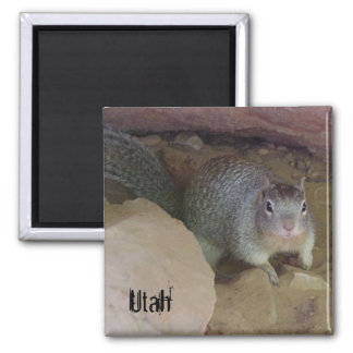 Utah Squirrel Magnets