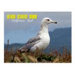 Utah State Bird - California Gull