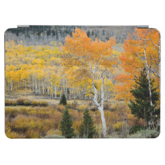 Utah, USA. Aspen Trees And Willow Thickets iPad Air Cover