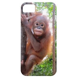 Uttuh Baby Orangutan in Jungle School iPhone 5 Cover
