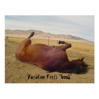 "Vacation Feel's ""Good"" Horse Postcard"