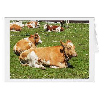 Vaches alpines en Autriche Carte De Vœux