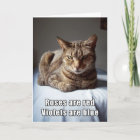 Valentine Cat funny poem Christmas Card