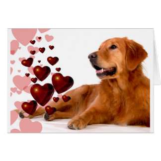 Valentine Red Hearts Golden Retriever Dog Card