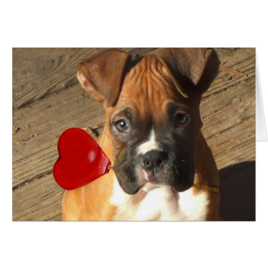 Valentine's Boxer puppy greeting card