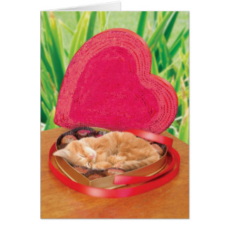 Valentine's Day Cat Card Funny Cute Adorable Best