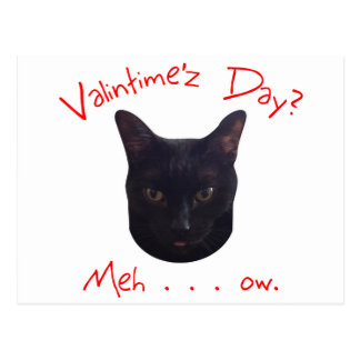 Valentine's Day Cat Meh Post Cards
