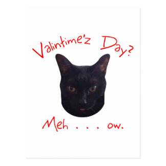 Valentine's Day Cat Meh Postcard