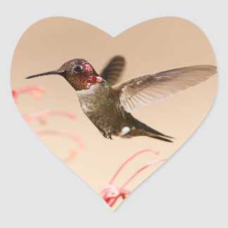 Valentine's Day Hummingbird Heart Stickers
