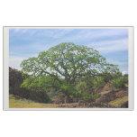 Valley Oak Tree Fabric