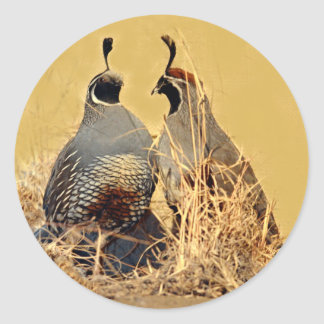 Valley Quail (California) Classic Round Sticker