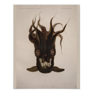 Vampire Squid Black Sea Creature Art Print