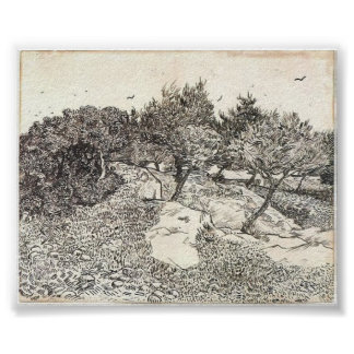 Van Gogh - Olive Trees Poster