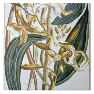 Vanilla pods, plate 65, from 'Collection Precieuse Tiles