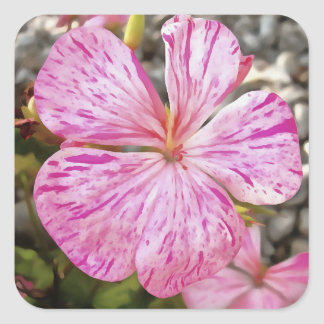 Variegated Begonia Pink Petals Square Sticker