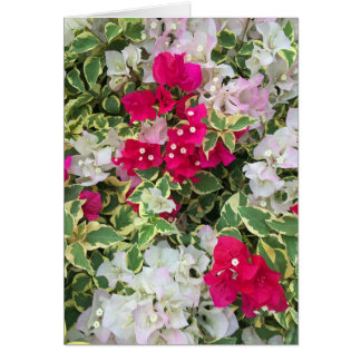 Variegated Bougainvillea Card