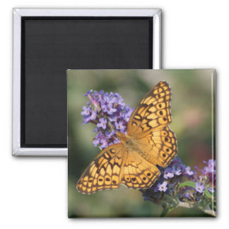 Variegated Fritillary Square Magnet