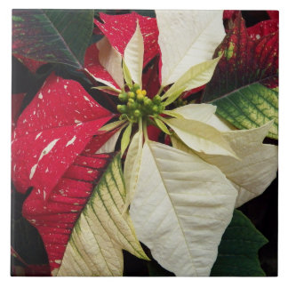 Variegated Poinsettia Holiday Tile