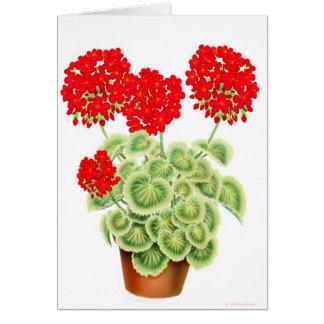 Variegated Red Geraniums Card