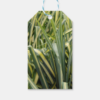 Variegated Sedge Grass Gift Tags