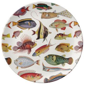 Varieties of Fish Porcelain Plates