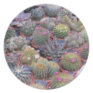Variety of small cactus background party plate