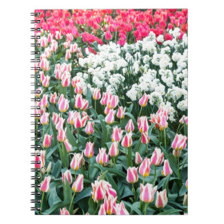 Various red tulips and white daffodils note books