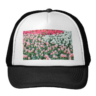 Various red tulips and white daffodils trucker hat