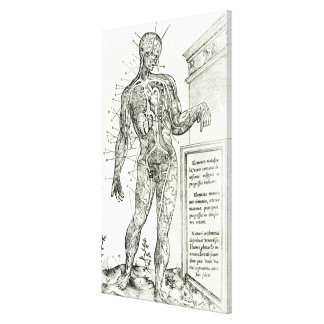 Vascular System according to Charles Etienne Canvas Print
