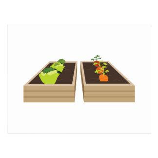 Vegetable Garden Postcard