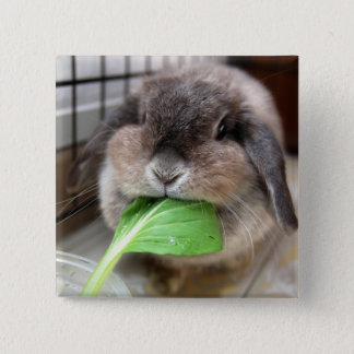 Vegetable munching (button) 2 inch square button