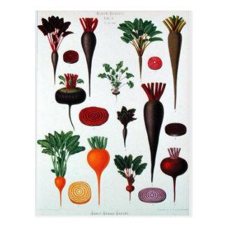 Vegetables - Bénary Postcard