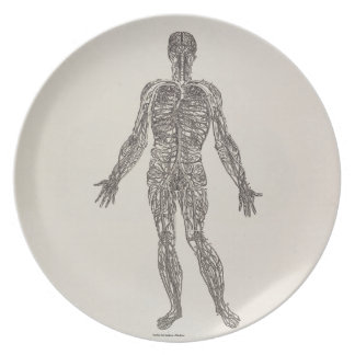 Veins and Arteries Dinner Plates