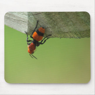 Velvet Ant Surveying Its Domain - Mouse Pad