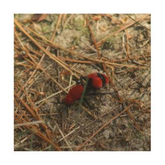 Velvet Red Ant, Wood Wall Art Print.