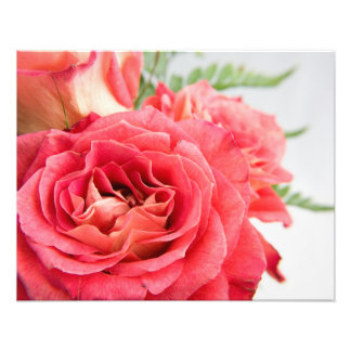 Velvety Pink Roses Photograph