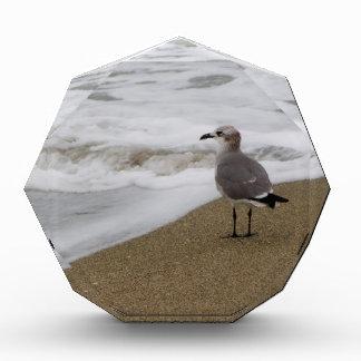 Venice Beach Bird