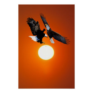 Venus in transit with eagles poster