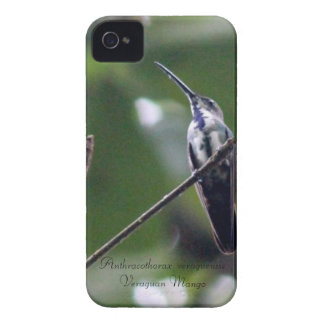 Veraguan Mango iPhone 4 Case