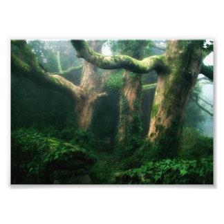 Verdant forest photo art