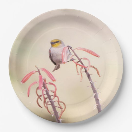 Verdin perched on penstomen 9 inch paper plate