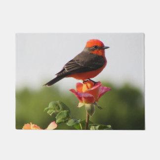 Vermilion Flycatcher on Rose Doormat