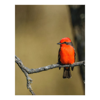 Vermillion Flycatcher Accessories and Gifts Letterhead