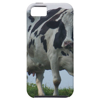 Vermont  Black and White Dairy Cow Case For The iPhone 5